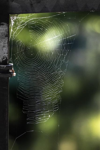 Cobweb, Nature, Network, Close, Strained Networks, Case