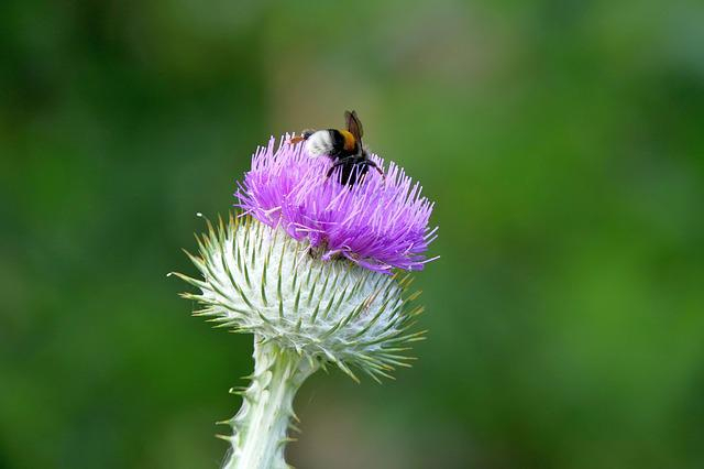 Thistle, Insect, Nature, Close, Plant