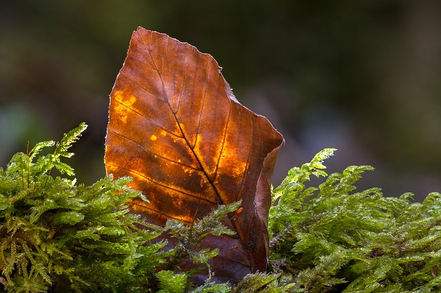 Leaf, Old Leaf, Beech Leaf, Forest, Nature, Close Up