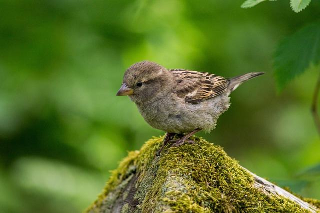 Animal, Bird, Close-up, Macro, Moss, Nature, Plumage