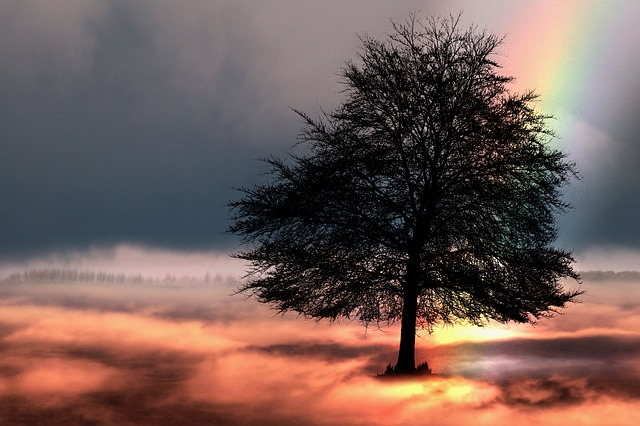 Tree, Rainbow, Sky, Fantasy, Nature, Mystical, Clouds
