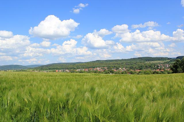 Barley, Field, Sky, Clouds, Nature, Green, Hill, Hesse