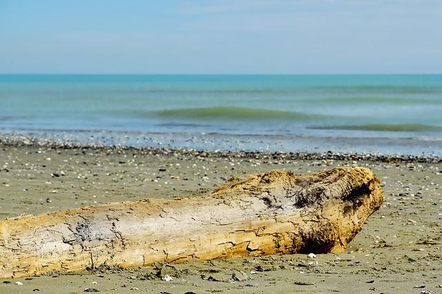 Waters, Sea, Drift Wood, Log, Nature, Coast