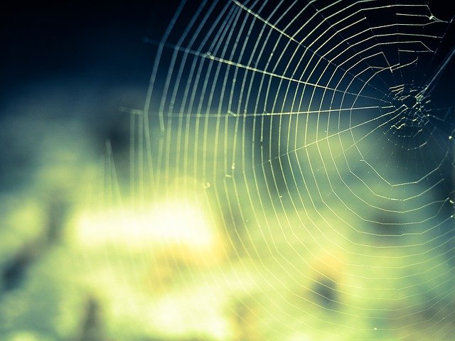 Cobweb, Network, Networking, Nature, Close, Lichtspiel