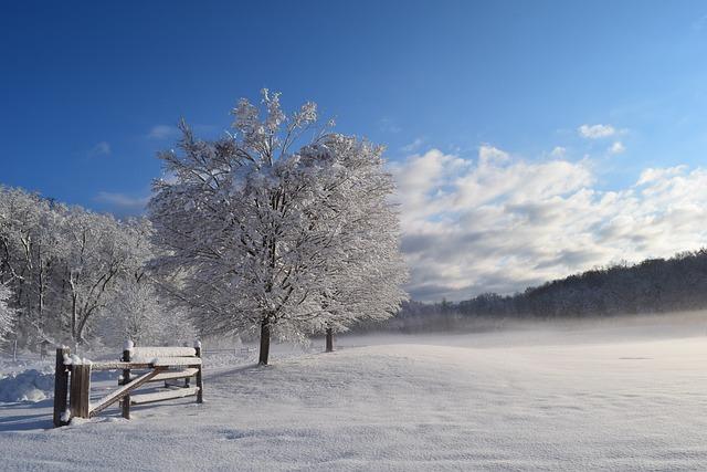 Snow, Tree, Winter, Cold, Frost, Nature, White, Season