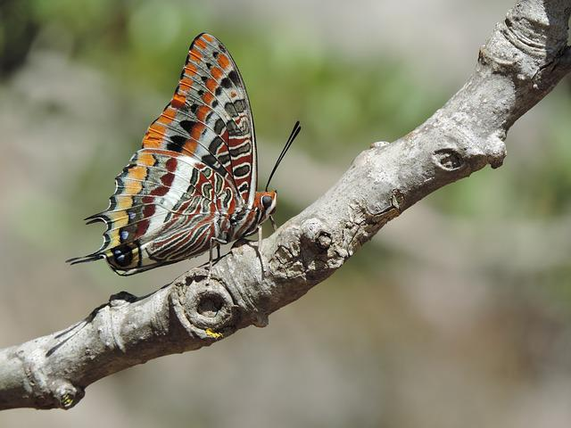 Nature, Color, Butterfly