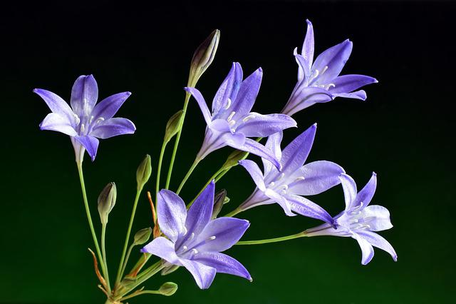 Flower, Nature, Flora, Beautiful, Petal, Closeup, Color