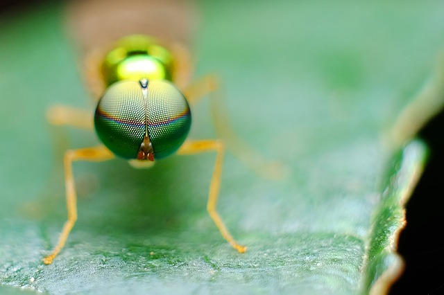 Eye, Insect, Nature, Macro, Fly, Green, Leaf, Colour