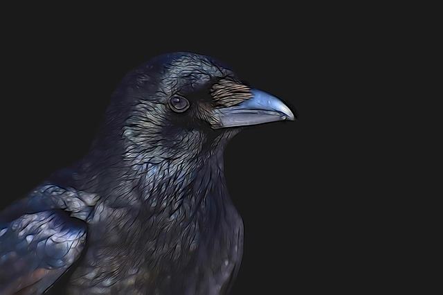 Raven, Common Raven, Bird, Animal World, Nature