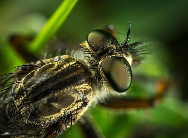 Insect, Compound Eyes, Hairy, Animals, Nature, Macro