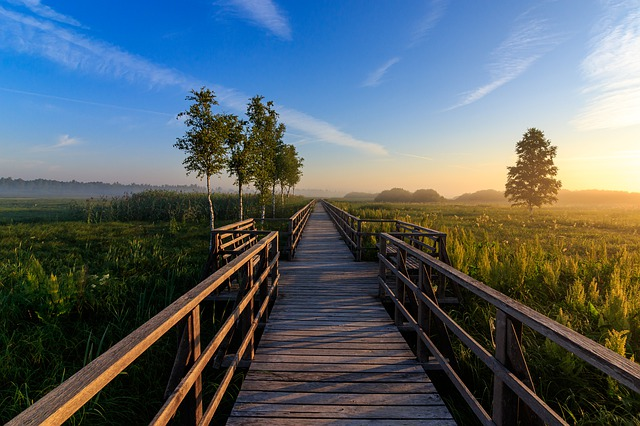 Spring Lake, Nature Conservation, Pier, Nature, Mood