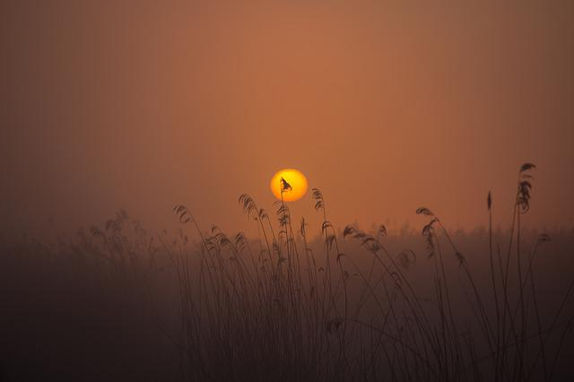 Sunrise, Spring Lake, Mood, Reed, Nature Conservation