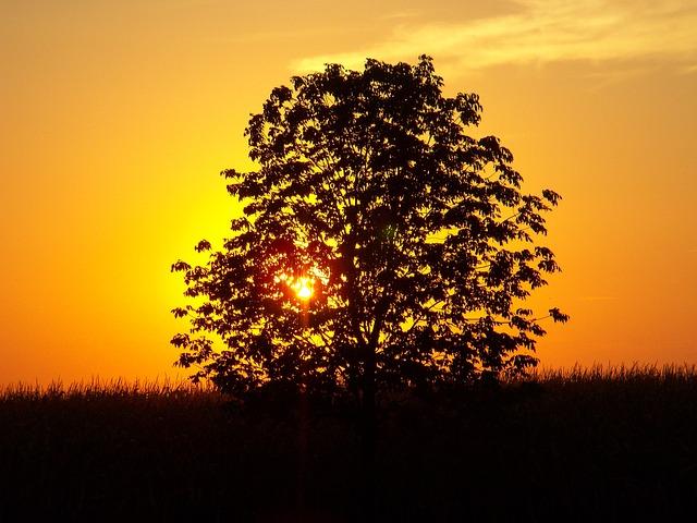 Sunset, Tree, Landscape, Corn Field, Outside, Nature