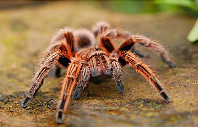 Spider, Creepy, Scary, Arachnid, Fear, Nature, Web