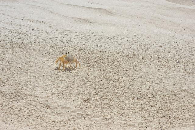 Sand, Crayfish, Crab, Nature, Wildlife, Crustacean