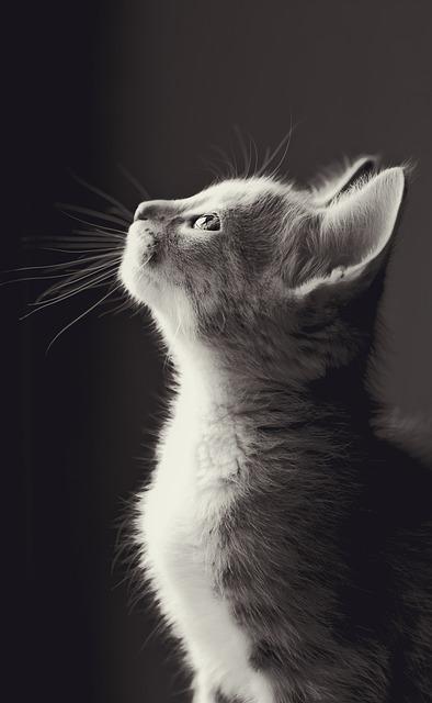 Cute, Animal, Mammal, Cat, Nature, Eye, Pet, Kitten