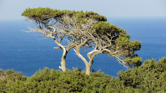 Cyprus, Cavo Greko, National Park, Trees, Sea, Nature