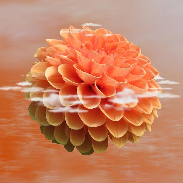 Dahlia Dahlia, Flower, Blossom, Bloom, Nature, Plant