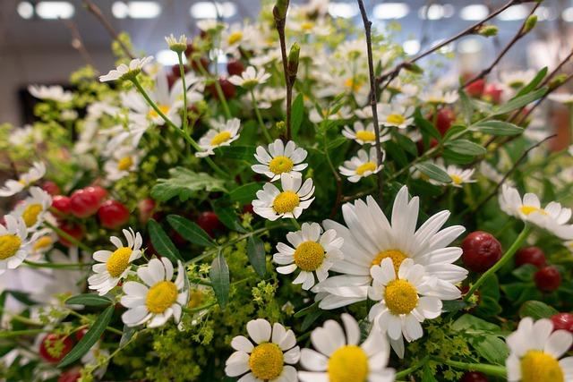 Flower, Daisies, Nature, Plant, Floral, Garden, Bouquet