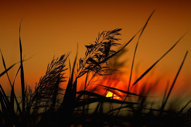 Sunset, Dawn, Day S, Nature, Silhouette, Heaven