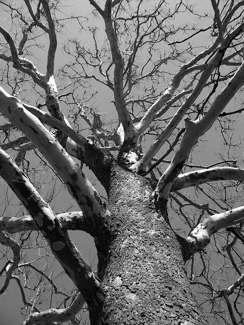 Tree, Dead, Winter, Branches, Aged, Nature, Environment