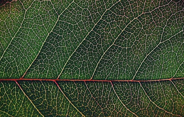 Leaf, Pattern, Desktop, Flora, Nature, Closeup