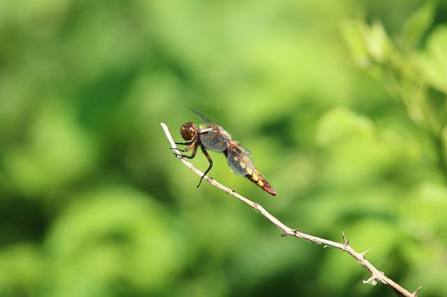 Dragonfly, Close, Insect, Green, Nature, Leaf