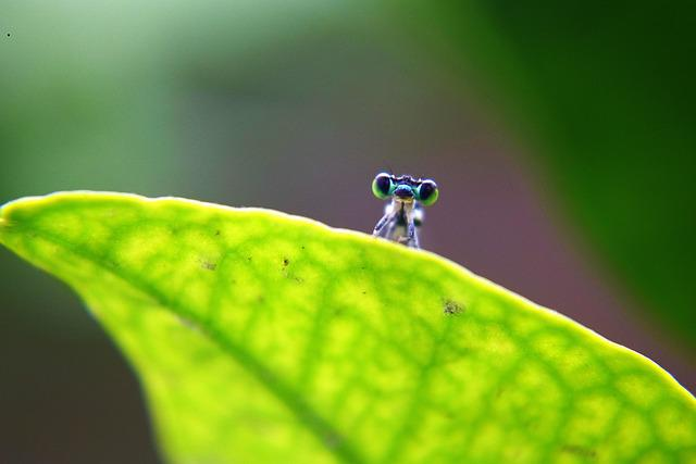 Dragonfly, Insect, Nature, Leaves