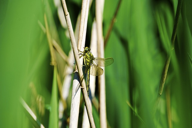 Dragonfly, Grass, Wing, Close, Nature, Animal