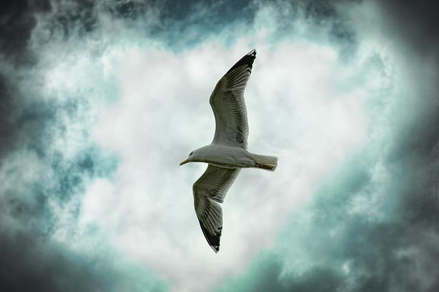Nature, Sky, Bird, Seagull, Dramatic, Flying, Clouds