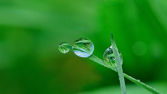 Nature, Drops, Flower, Plant, Green, Water, Leaves