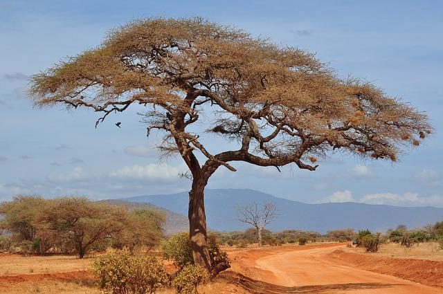 Tree, Nature, Landscape, Dry, Sky, Savannah, Africa