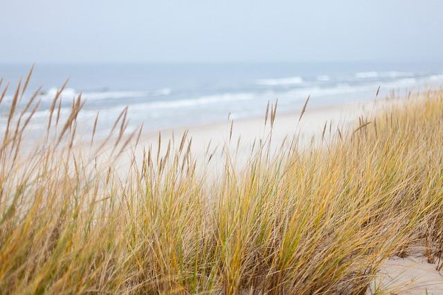 Dunes, Sea, Baltic Sea, Beach, Coastline, Nature, Sand