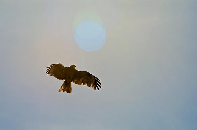 Bird, Eagle, Nature, Sky