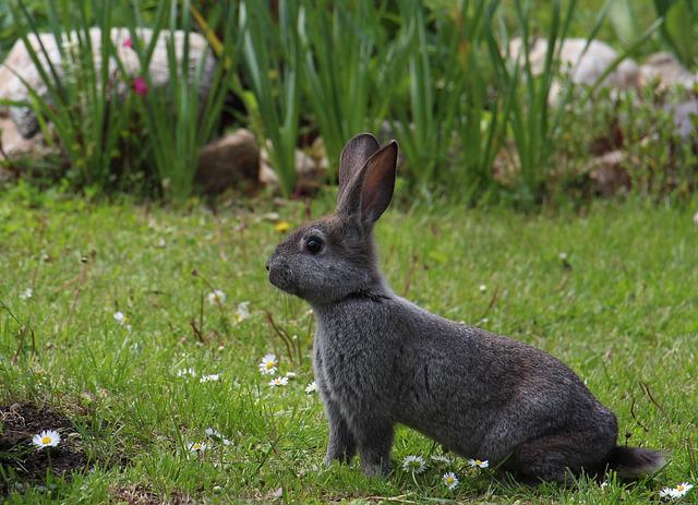 Hare, Animals, Gray Hare, Rabbit, Easter, Nature
