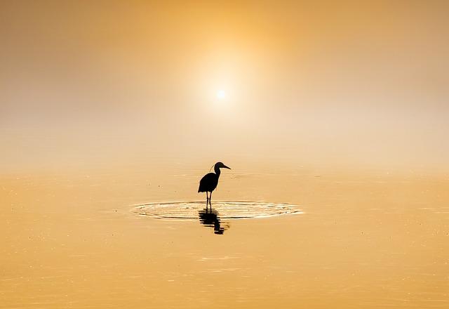 Heron, Egret, Animal, Nature, Flight, Wings, Feathers