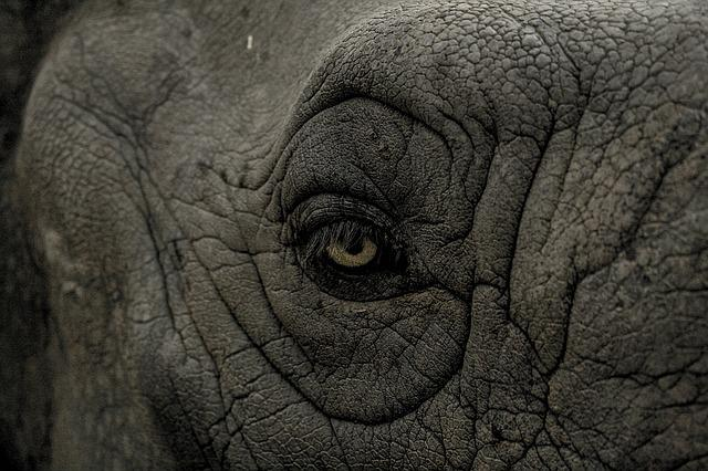 Eye, Elephant, Wild, Animal, Nature, Wildlife, Mammal