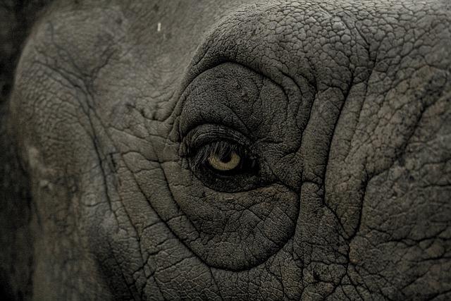 Eye, Elephant, Wild, Animal, Nature, Wildlife, Mammal