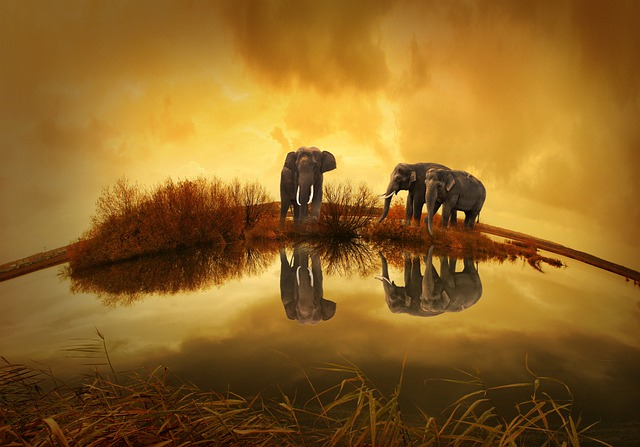 Thailand, Elephant, Sunset, Nature, Animals