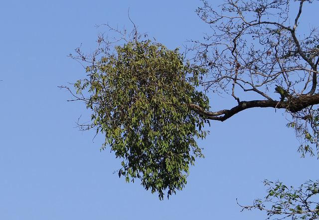Epiphyte, Flora, Vegetation, Nature, Forest, Plant