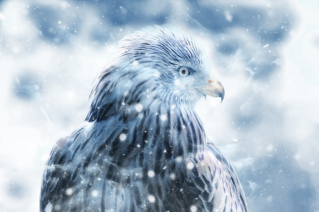Bird, Hawk, Snow, Art, Vintage, Winter, Falcon, Nature