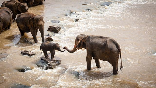 Elephants, Family Group, River, Wildlife, Nature