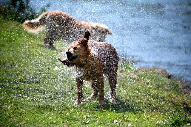 Dog, Nature, Lawn, Animal, Fauna