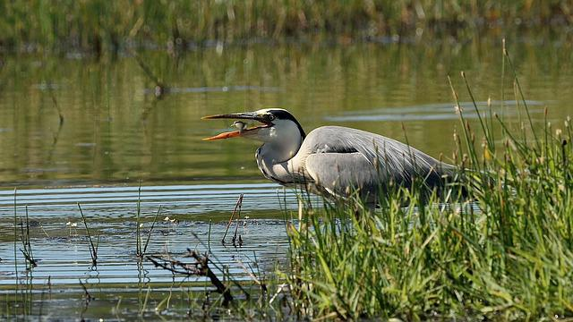 Bird, Fauna, Body Of Water, Marsh, Nature