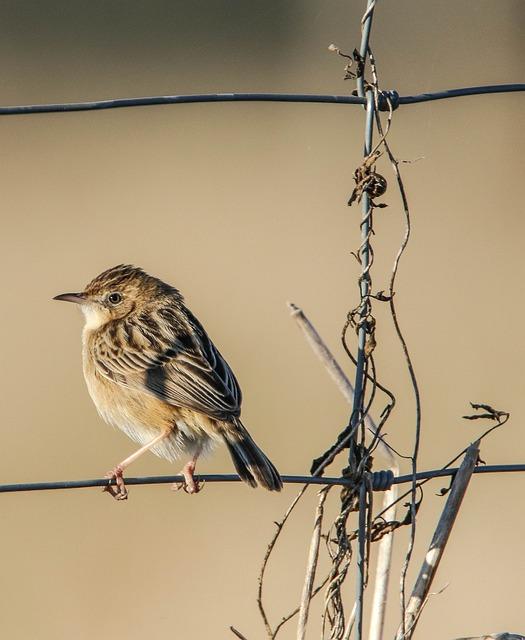 Bird, Nature, Life, Fauna