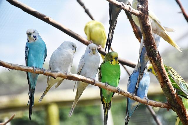Birds, Parrots, Animal, Nature, Plumage, Feather