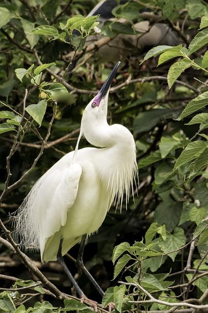 Nature, Bird, Wildlife, Animal, Wild, Tropical, Feather