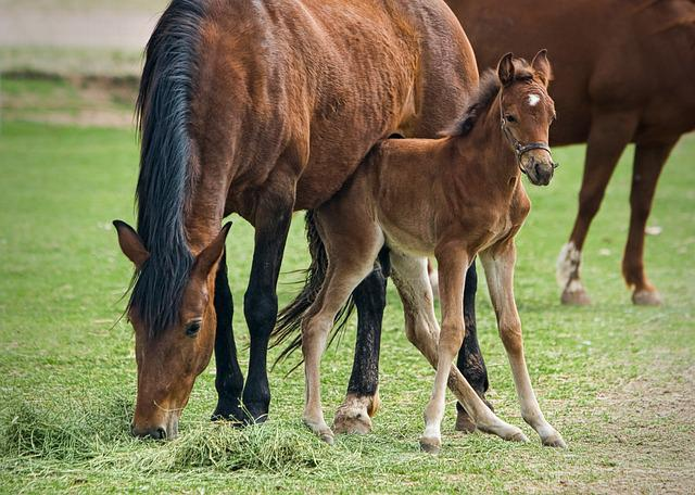 Mare, Foal, Horse, Animal, Nature, Equine, Farm, Filly