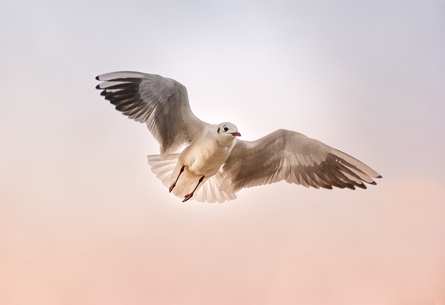 Seagull, Nature, Animal, Bird, Wing, Float, Sky