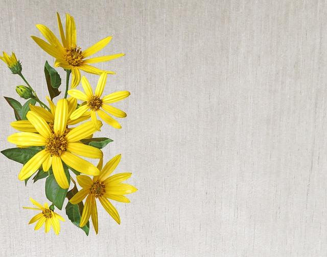 Greeting Card, Flower, Nature, Flora, Desktop